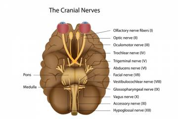 Cranial Nerves Palsies and Botulinum Toxin